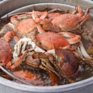 Boiled Gulf Crabs